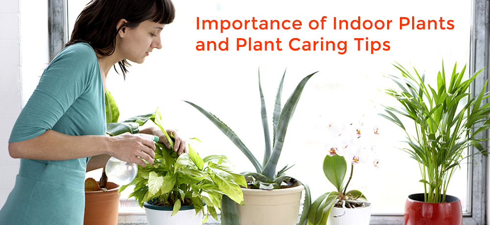 Interior plant rental, Interior plant maintenance, Custom Floral design, healthy environment