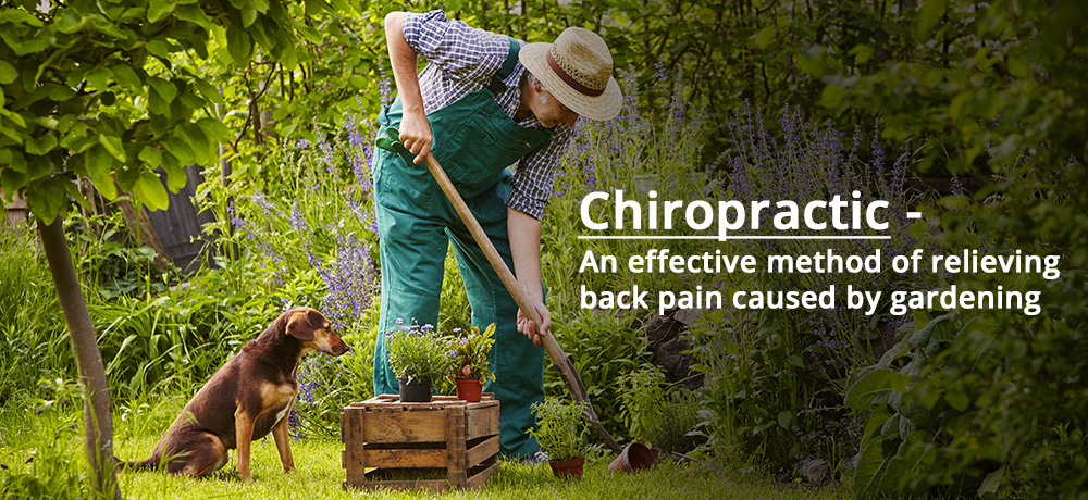 Chiropractic - an effective method of relieving back pain caused by gardening