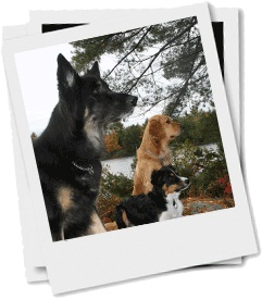 Purity dogs polaroid