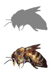 honeybee-Sillouette