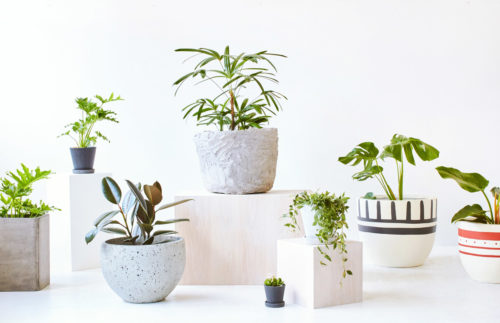 10 Easy to Care for Indoor Plants